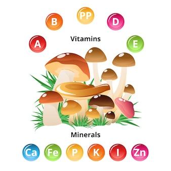 Грибная пищевая инфографика