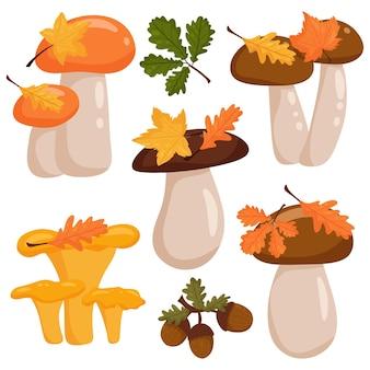 Набор грибов. элемент осеннего дизайна, листья, желуди. векторные иллюстрации в мультяшном стиле, изолированный белый фон