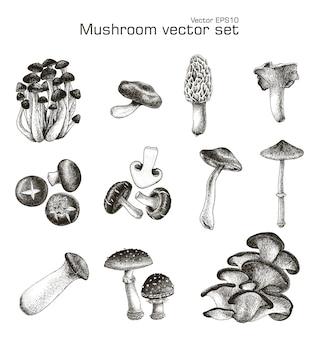 Mushroom set hand drawing