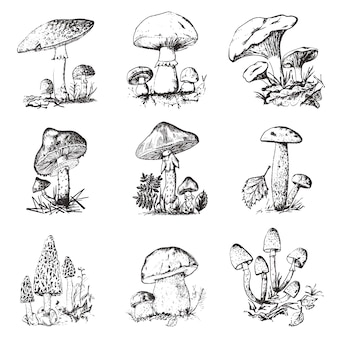 Mushroom set hand drawn engraved. vintage organic vegetarian food.