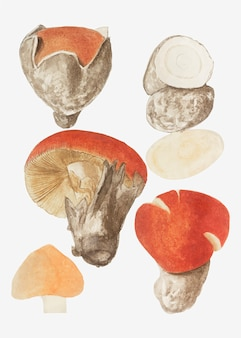 Mushroom variety in vintage style