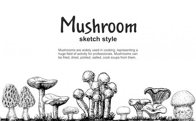 Грибы границы, рисованной эскиз коллекции. грибной рисунок бесшовные границы. пищевая рамка эскиз. шампиньоны, сморчки, белые грибы, устрицы, лисички. для меню, этикетки, упаковки продукта