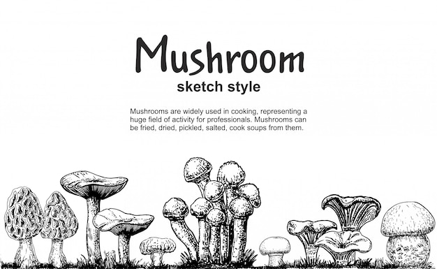 Грибы границы, рисованной эскиз коллекции. грибной рисунок бесшовные границы. изолированная еда кадр эскиз. шампиньоны, сморчки, белые грибы, устрицы, лисички. для меню, этикетки, упаковки продукта
