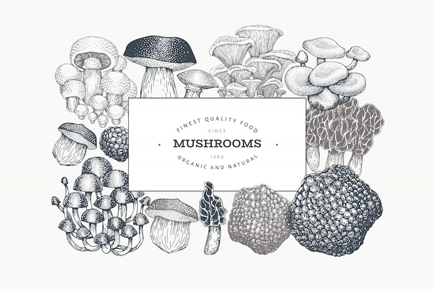 Mushrooms design template. vector hand drawn illustrations.