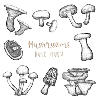 Mushrooms hand drawn set, isolated vintage style design elements.