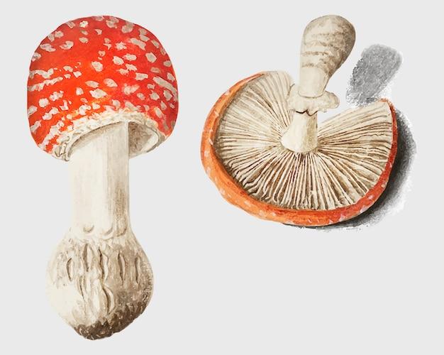 Mushrooms in vintage style