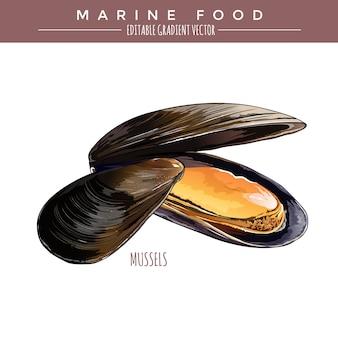 Mussels. marine food