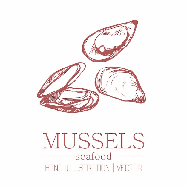 Mussels. vintage style. hand drawing.