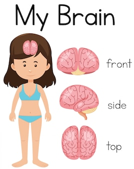 My brain with young girl