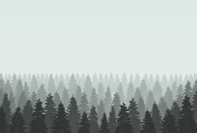 Mysterious foggy forest landscape