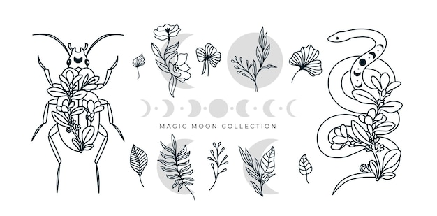 Mystical collection of floral line art snake beetle insect moon phases authentic illustration