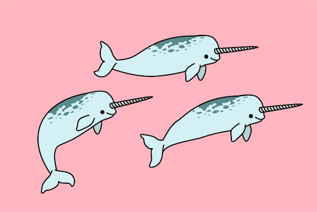 Narwhal, the sea unicorn illustration