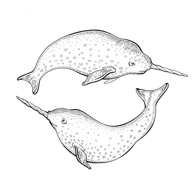 일각 고래 유니콘 스케치, 귀여운 고래 그림입니다. 세계 해양의 날을위한 바다 동물 예술.