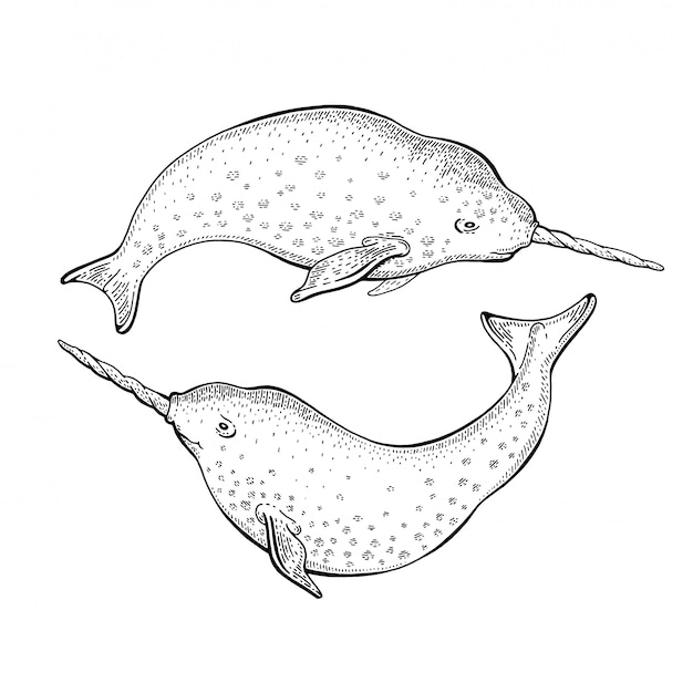 Narwhal unicorn sketch, cute  whale illustration. sea animal art for world oceans day.