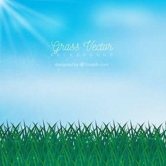 Sfondo naturale con erba e cielo blu