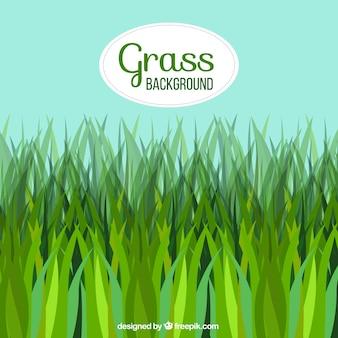 Sfondo naturale con erba in toni verdi