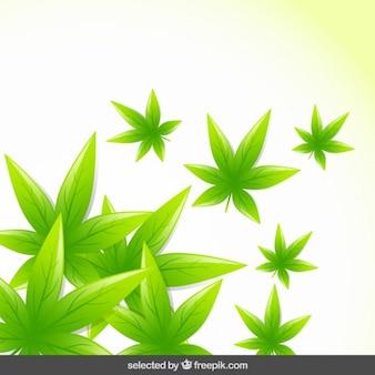 Естественный фон с зелеными листьями