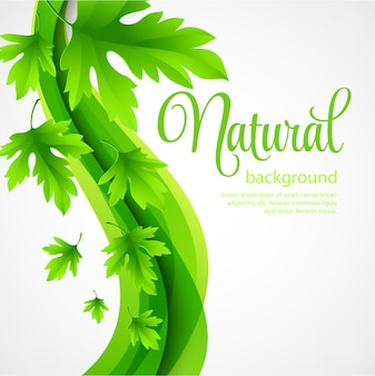 Natural  background with green spring leaves