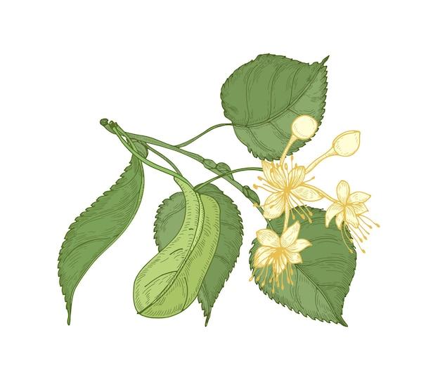 잎과 아름다운 개화 꽃과 린든 무늬의 자연 상세 도면.