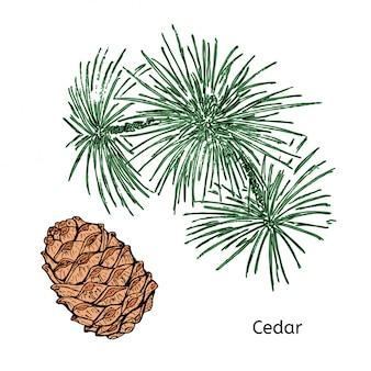 Natural drawing cedar concept