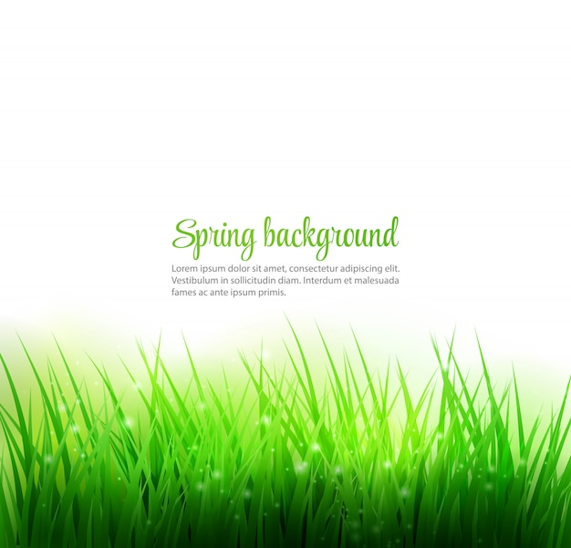 Естественный фон зеленой травы