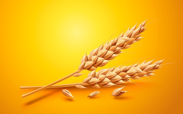 Natural ingredient element, close up look at wheat isolated on yellow background