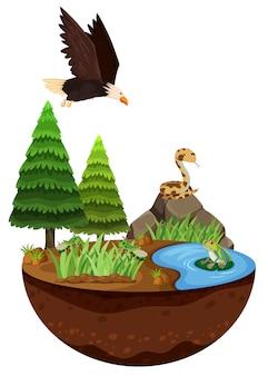 Природный ландшафт и дикие животные