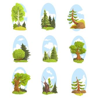 다양 한 나무와 자연 풍경 설정합니다. 침엽수 및 낙엽수 화려한 일러스트