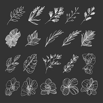 Коллекция природных листьев и цветов диких лесов