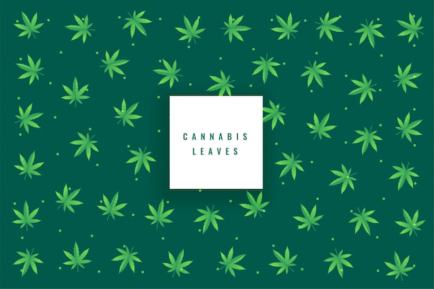 Natural marijuana cannabis leaves pattern background