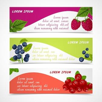 ラズベリーブルーベリーカウベリーデザインテンプレートベクトルイラストの自然の有機林の果実のバナーのセット