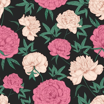 Natural seamless pattern with beautiful peony flowers hand drawn on black background.