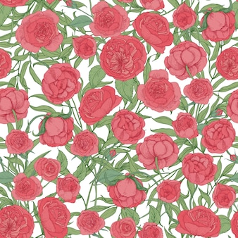 Natural seamless pattern with blooming garden pink english