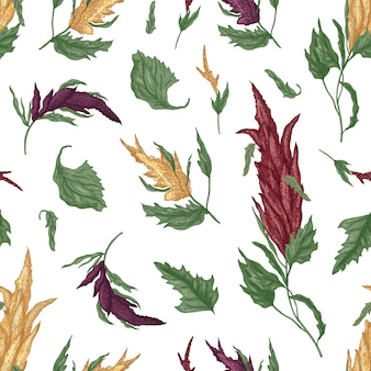 Natural seamless pattern with quinoa or amaranth flowering plant on white