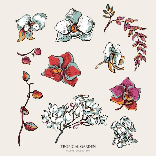 咲く蘭の自然なセット。エキゾチックな花