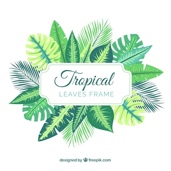 Natural tropical leaves frame