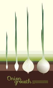 자연적인 흰 양파 성장 개념