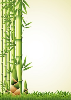 Nature background design with bamboo