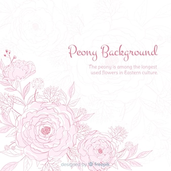 Nature background with cute peony flowers