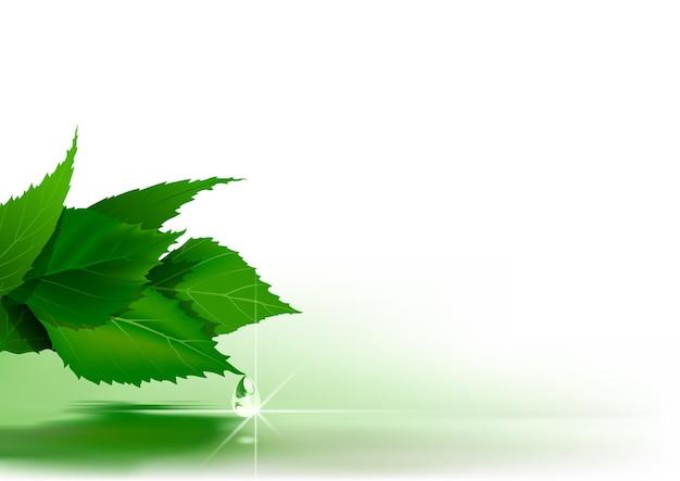 물 표면 위에 녹색 잎과 자연 배경