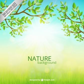 自然の背景