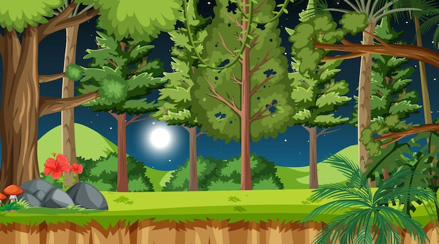 많은 나무와 밤 장면에서 자연 숲