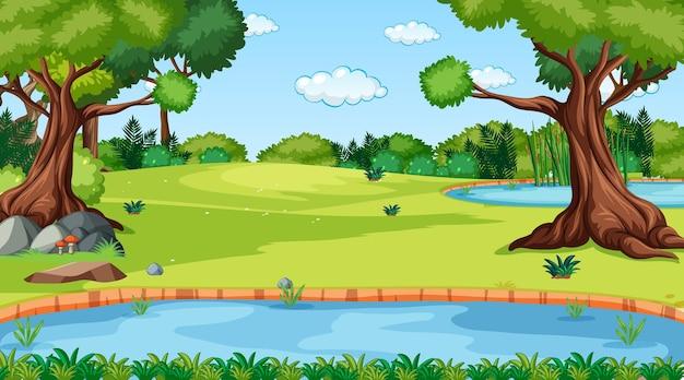 森の中を流れる川のある昼間の自然林の風景