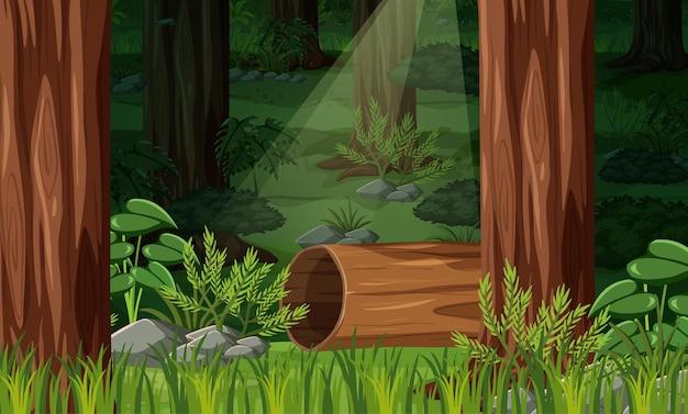 Природа лесной пейзаж фон