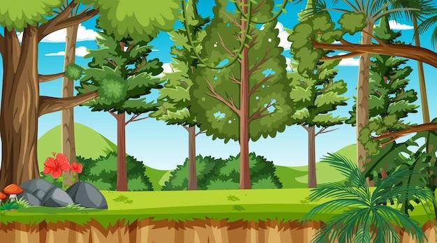 昼間の自然林景観シーン