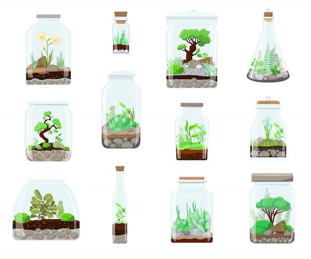 유리 테라리움 정원, 장식 자연 식물학 만화 그림 흰색 절연에 자연 녹색 식물. 생태계는 병 구성으로 자랍니다. 즙이 많은, 나무, 꽃, 선인장