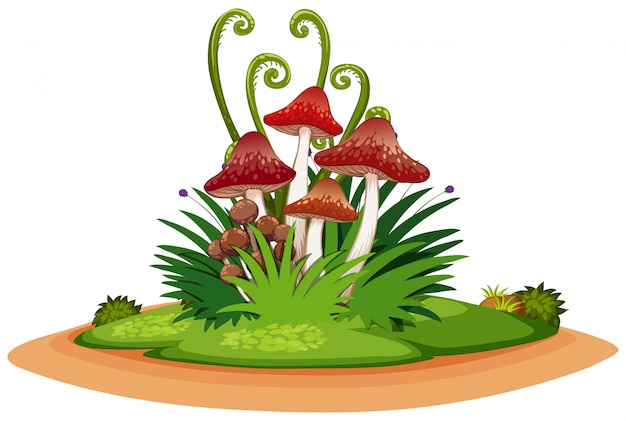 Nature landscape of park with grass and mushroom