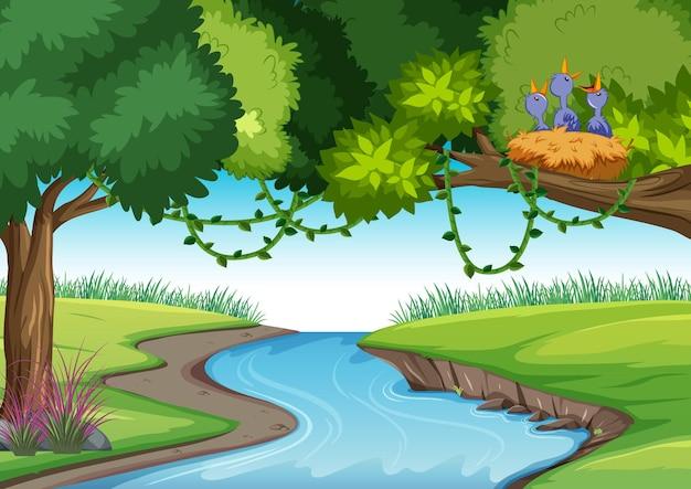 自然屋外の森の背景