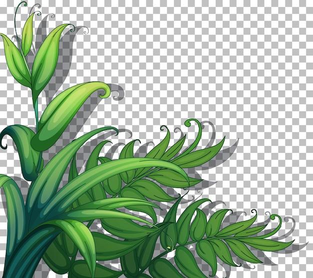 Le piante della natura incorniciano lo sfondo trasparente