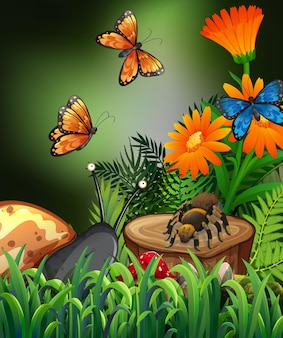 Nature scene with butterflies and spider in garden